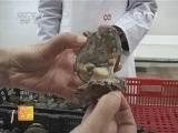 农广天地,鲍鱼加工技术