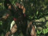 《孤岛惊魂3》多人合作模式宣傳片