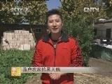 黑天鹅养殖致富视频