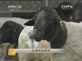 养羊农广天地,优质肥羔羊生产技术