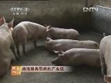 养猪科技苑,烦恼猪粪带来的产业链