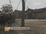张德华养鸭致富经,千万老总回乡当村主任后