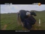 《探索·发现》 20130108 天赐康巴(二)
