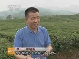 养猪科技苑,茶山上建猪圈