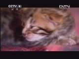 [子宫日记]新生的小猫
