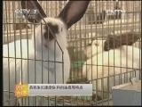 肉兔优良引进品种介绍