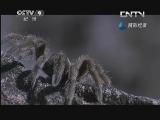 《生命》 20130611 片段 卵石蟾蜍