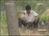 黄爱青猕猴养殖