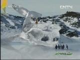 《人与自然》 20130828 自然启示:动物冬季奥运会(下)
