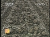 农广天地,苔干栽培及初加工方法