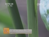 [农广天地]槟榔的栽培技术(20131202)