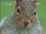 动物世界 - 若愚悟 - 若愚悟.blog的博客