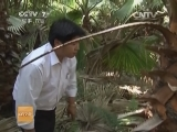 [科技苑]一路向北的棕榈树(20131206)