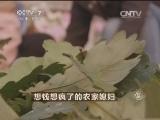 杨桂云�K椤叶致富经,想钱想疯了的农家媳妇