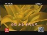 """[科技苑]为凤梨花洗""""胃""""(20131213)"""