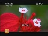 [科技苑]追踪植物红娘(上)(20140107)