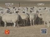 养羊科技苑,老母羊不再招人烦