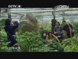 [牡丹]第一集 唯有牡丹真国色 从洛阳到台湾