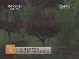 [农广天地]彩叶树苗木造型技术(20140402)