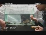 林拱辉鲍鱼养殖生财有道,与众不同的鲍鱼经