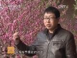 """[科技苑]刘端明的""""桃花运""""(20140415)"""