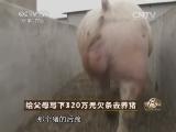 庞颖养猪致富经,给父母写下320万元欠条去养猪