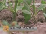 [农广天地]菊芋种植技术(20140428)