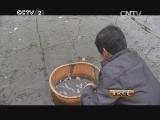 陈文龙水产养殖生财有道,从不赔钱的养虾人