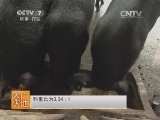 [农广天地]湘村黑猪养殖技术(20140507)