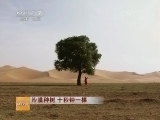 [科技苑]沙漠种树 十秒钟一棵(20140605)
