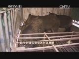 马刘洋养猪致富经,退学创业失败后的财富发现(20140624)