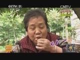 """[科技苑]改""""嫁""""的樱桃更好吃(20140716)"""