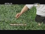严金友茶叶致富经,屡战屡败全省闻名之后(20140716)