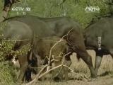 《自然传奇》 20140803 直击非洲