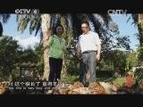 《寻找最美花园》 20140802 版纳棕榈园