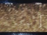 《自然传奇》 20140807 动物大排行之毒蛇