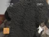 [农广天地]岷县黑裘皮羊养殖技术(20140810)