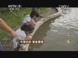 李年丰养怪鱼致富经,失意校长 怪鱼赚钱(20140813)
