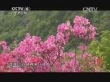 《寻找最美花园》 20140823 映山红大观园:杜鹃情牵大别山