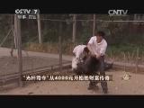 """廖正军养鸡致富经,""""光杆司令""""从4000元开始的财富传奇(20141112)"""
