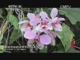 《寻找最美花园》 20141213 西双版纳热带植物园:奇花异木的植物王国