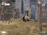 《熊猫放映室》第四集:翻滚吧!自嗨君(2)!