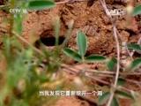 《走近科学》 20151217 蜥蜴的劫难(下)