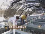 林雄石斑鱼致富经,混养高手池塘里的秘密