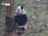 《早安熊猫》第56期:多么想和你坐着聊聊天