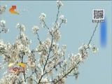 [看今朝]春游归来脸红肿 花粉过敏怎么防
