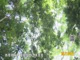 《远方的家》 20160824 特别节目——跟植物学习感恩