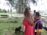 《远方的家》 20161128 一带一路(62)印度尼西亚 北马鲁古风情