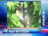 东南亚观察 2016.12.31 - 厦门卫视 00:09:27