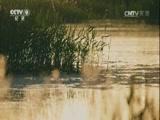 《自然的力量》第三集 水流 00:49:19